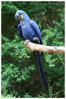 Blue Parrot by TheDarkRoom-Photo