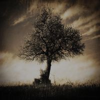Once upon a ... Tree by anaPhenix
