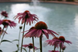 Flowers against Fountains by Dramier