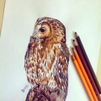 Tawny Owl by GabrielleC-Drawings