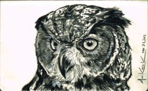 Owl Sketch by NickMockoviak