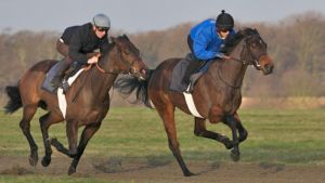 Training the Thoroughbreds on Newmarket Heath by Loves2dive