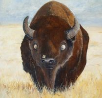 Buffalo by acemurray