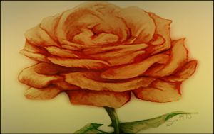 Rose by Sara1970