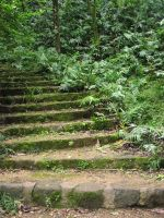 Stairway to Hawaii by Della-Stock