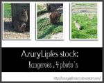 Exotic Animals pack by AzurylipfesStock