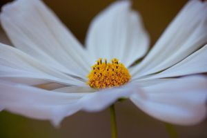In the middle by Pamba
