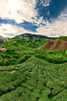 BOH tea plantation by Draken413o