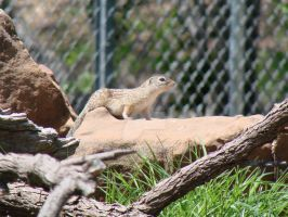 The Rare And Exotic Chipmunk by Teh-Valles