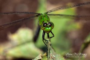 Dragonfly In Green by Annushkka
