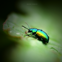 Rainbow Beetle by DREAMCA7CHER