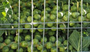 Seasonal Sprouts by sags