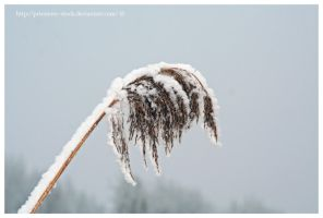 winterland macro 6 by priesteres-stock
