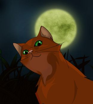 The firebrand of ShadowClan by ArcticRaccoon