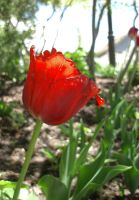 A Red Flower by CaseyJewels