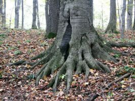 Roots by SingularStock