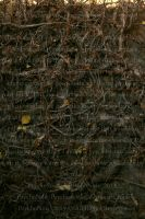 Branches covered wall by PzychoStock