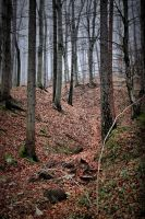 mystic forest II by pauljavor