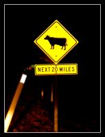 feral cows of arizona warning by syncretism