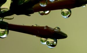Droplets...first of 2013 by duggiehoo