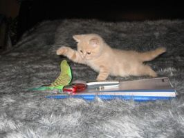 Kitten and a parakeet by senessance