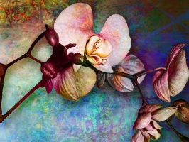 Orchid Pink by Tackon