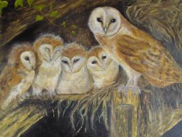 my owls, credit dick twinney by dlockett2