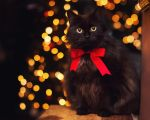christmas kitty.. by Thunderi