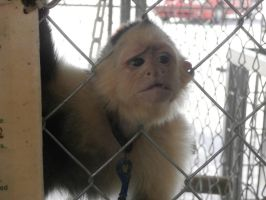 somethings wrong with boots the monkey by elijahloveshorror