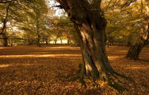 Epping Forest 1 by LughoftheLongArm