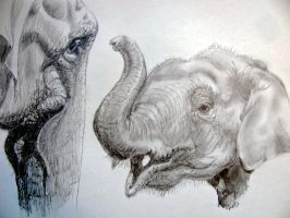 Elephants by chrisravensar