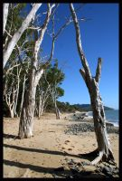 stark trees at the beach by Buddhalassie