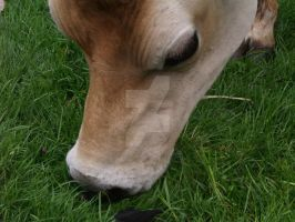 cow Jersey .13. by kittykatty89