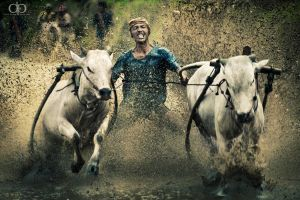 Bull Race by Dapicture