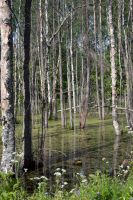 Trees in a swamp stock #8 by croicroga