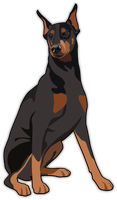 Doberman Pinscher by tapash09