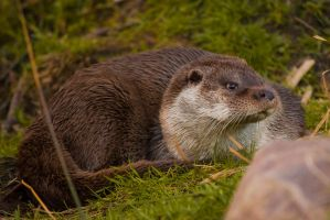 Curious Otter II by NicoFroehberg