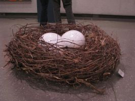 Nest And Eggs 2 by ItsAllStock