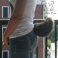 .Fluff. Brown Short Tail (Left) (Sold) by TigeroftheWinds