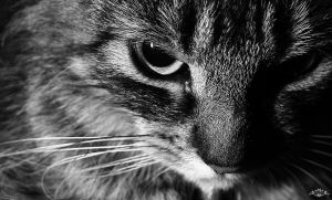 my cat II by thehomeboy