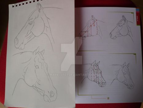 two horse heads + reference by Mariel0503