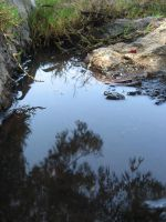 puddle 1 by stockofshutterbugmom