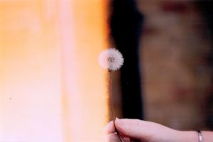 Dandelion by sophierevell