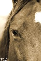 EQUINES EYE by TlCphotography730
