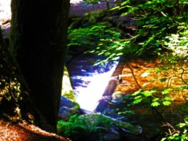 The Creek Through The Trees by XxMissesNumberNEINxX