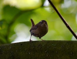 little Bird by FrankAndCarySTOCK