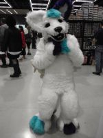 ..:sakuracon:..FURRY by coffaefox