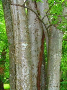 Tree trunks by CultureQuest