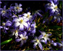 Purpleflowersspring2015 by Hoodwinkstar