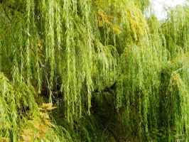 Willow by JayLPhotography